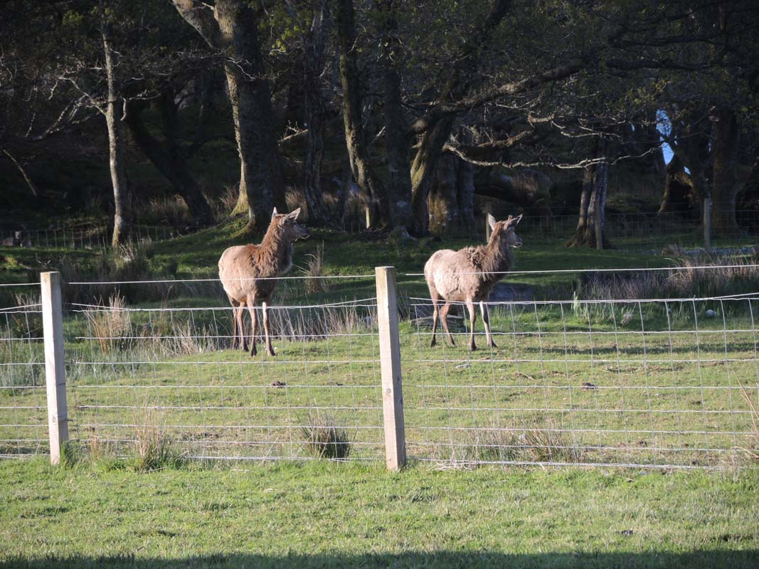 coopers-knowe-house-self-catering-scotland-flora-fauna-1