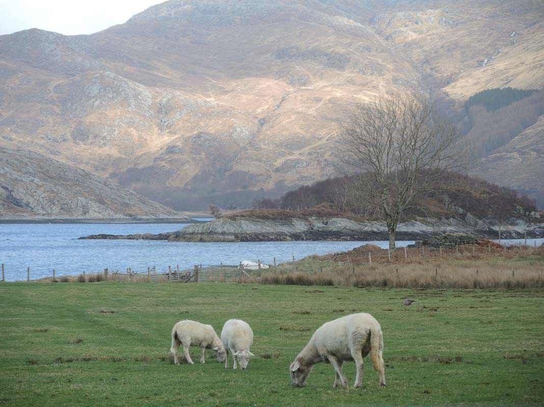 coopers-knowe-house-self-catering-scotland-flora-fauna-2
