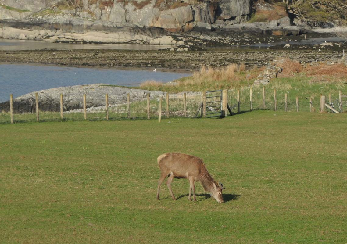 coopers-knowe-house-self-catering-scotland-flora-fauna-3